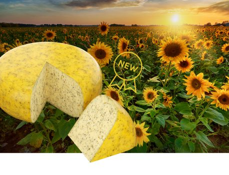 New: Summer Cheese